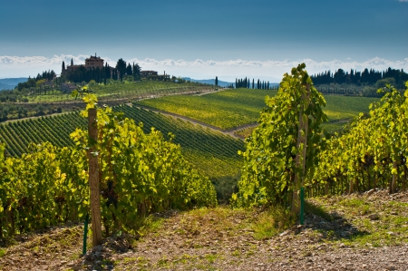 Tuscany landscape with wine  mural