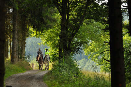 Photo pour On a horse ride in an forest in the Belgian Ardennes - image libre de droit