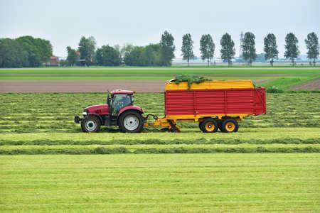 Foto de Tractor pulled a forage harvester harvests cutted hay silage into a silage wagon. - Imagen libre de derechos