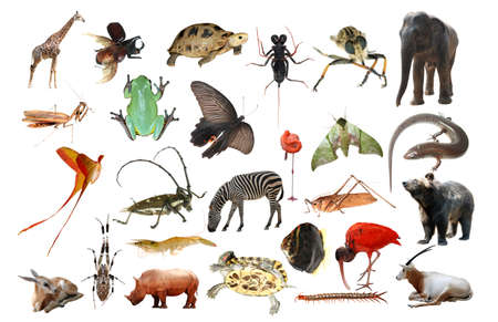 wild animal collection isolated in white