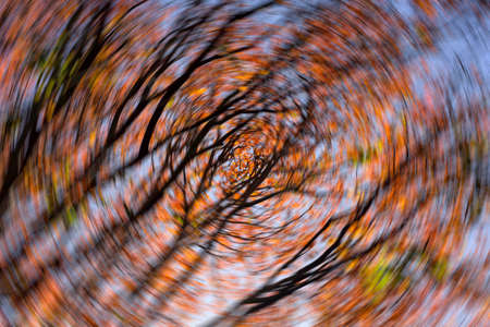 Photo pour Abstract Spinning looking up view to autumn leaf - image libre de droit