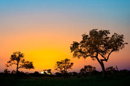 Photo for African sunset - Royalty Free Image