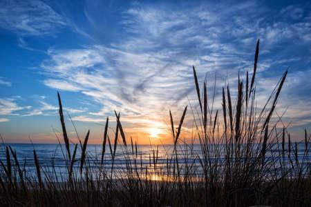 Foto de Sunset on atlantic ocean, beach grass silhouette in Lacanau France - Imagen libre de derechos