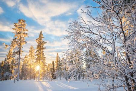 Photo pour Snowy landscape at sunset, frozen trees in winter in Saariselka, Lapland, Finland - image libre de droit