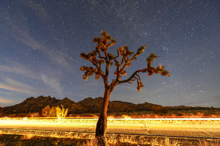 Photo pour Beautiful landscape in Joshua Tree National Park in California at night. - image libre de droit