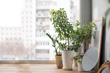 Photo for Small green potted plants on wooden window sill at home.  - Royalty Free Image