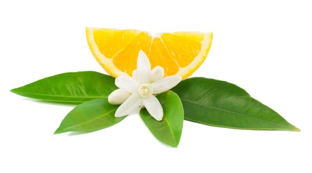 Foto de Orange,  leaf, flower and slice  Isolated on a white background   - Imagen libre de derechos