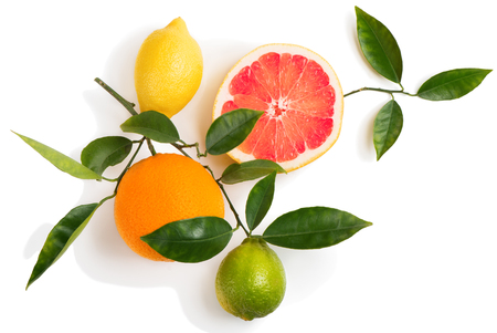 Photo pour Top view of citrus fruits (grapefruit, orange, lemon, lime) on a branch with green leaves isolated on white background. - image libre de droit