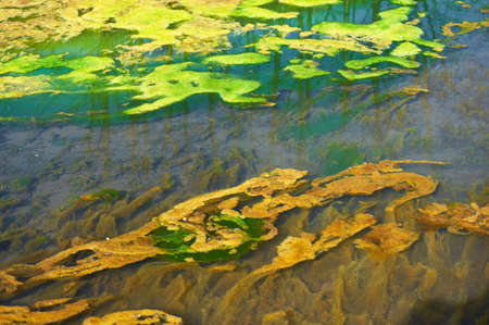 Photo for Green and orange algae on the river. Environmental pollution. - Royalty Free Image