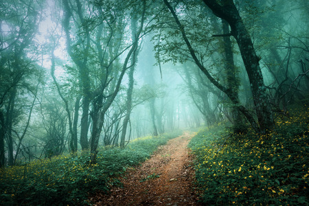 Photo for Road through a mysterious dark forest in fog with green leaves and yellow flowers. Spring morning in Crimea. Magical atmosphere. Fairytale - Royalty Free Image