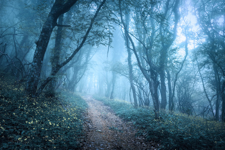 Foto de Trail through a mysterious dark forest in fog with green leaves and flowers. Spring morning in Crimea. Magical atmosphere. Fairytale - Imagen libre de derechos
