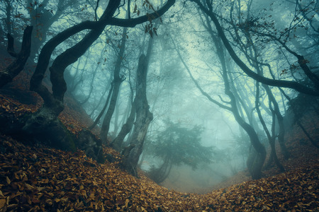 Photo for Trail through a mysterious dark old forest in fog. Autumn morning in Crimea. Magical atmosphere. Fairytale - Royalty Free Image