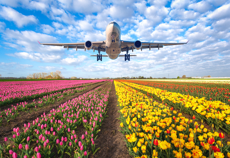 Foto de Airplane. Landscape with passenger airplane is flying in the blue sky with clouds over the flowers field at colorful sunset in Netherlands. Passenger airliner is landing. Commercial plane and tulips - Imagen libre de derechos