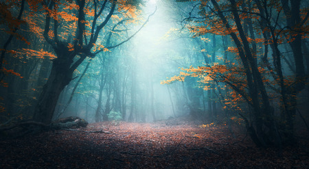 Foto de Beautiful mystical forest in blue fog in autumn. Colorful landscape with enchanted trees with orange and red leaves. Scenery with path in dreamy foggy forest. Fall colors in october. Nature background - Imagen libre de derechos