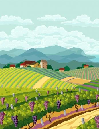 Illustration pour Rural landscape with vineyard and mountain panoram - image libre de droit