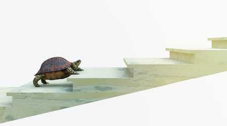 Photo for moving turtle wants to climb on the stairs concept background - Royalty Free Image