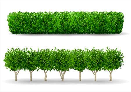 Illustration pour Bush in the form of a green hedge. Ornamental plant. The garden or the Park. Set of fences. - image libre de droit