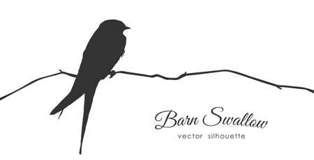 Illustration for Silhouette of Barn Swallow sitting on a dry branch. - Royalty Free Image