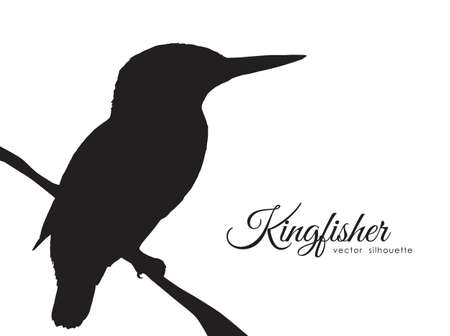 Illustration pour Vector illustration: Silhouette of Kingfisher sitting on a dry branch. - image libre de droit