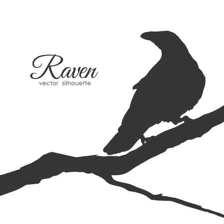 Illustration pour Vector illustration: Silhouette of Raven sitting on a dry branch isolated on white background. - image libre de droit