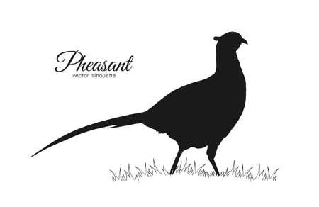 Ilustración de Vector illustration: Black silhouette of pheasant on white background - Imagen libre de derechos