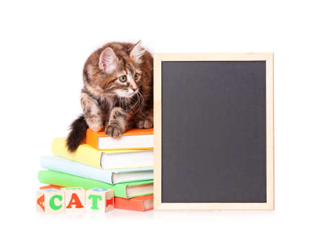 Cute little kitten with books and blackboard over white background