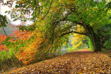 Foto de Path under a big autumn tree in het Amsterdamse bos  Amsterdam wood  in the Netherlands  HDR - Imagen libre de derechos