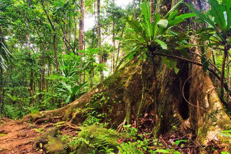 Foto de Beautiful view of the rainforest jungle of the Masoala National Park in Madagascar, a UNESCO world heritage site - Imagen libre de derechos