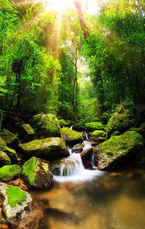 Foto de Beautiful vertical panorama of a cascade in the rainforest jungle of the Masoala National Park in Madagascar  - Imagen libre de derechos