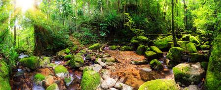 Foto de Beautiful 180 degree panorama of a stream in the rainforest jungle of the Masoala National Park in Madagascar  - Imagen libre de derechos