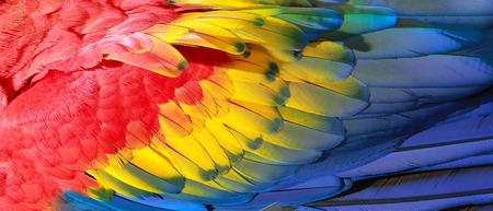 Foto de Parrot feathers, red, yellow and blue exotic texture - Imagen libre de derechos
