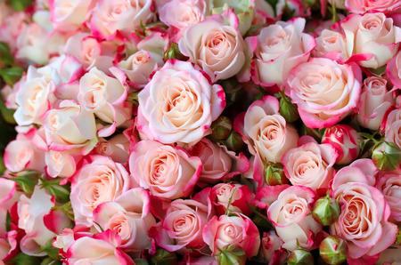 Photo pour Roses background - image libre de droit