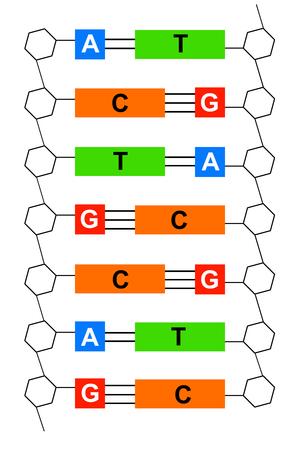 Foto de DNA illustration - Imagen libre de derechos