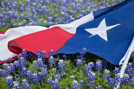 Photo pour Low angle view of a Texas flags laying among bluebonnet flowers on a bright spring day in the Texas Hill Country - image libre de droit