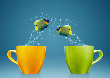 Photo pour Angelfish jumping out of cup with water splashes and Acrobatic movement. - image libre de droit