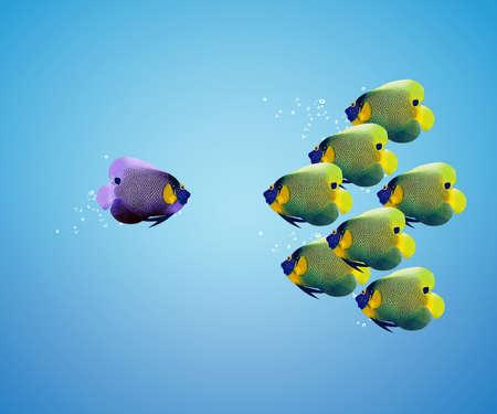 big angelfish leading group of angelfish.