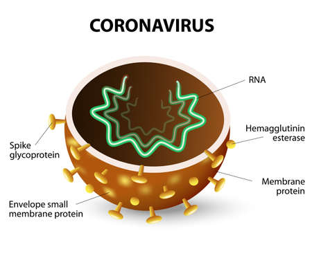 Illustration pour inside of a Corona Virus. Corona Virus is a strain of virus that causes a of illness in Humans, from the common cold to SARS. - image libre de droit