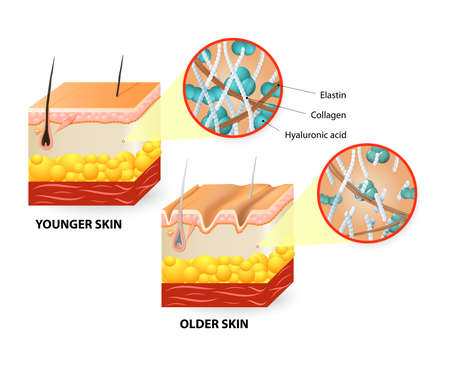 Illustration pour Visual representation of skin changes over a lifetime. - image libre de droit
