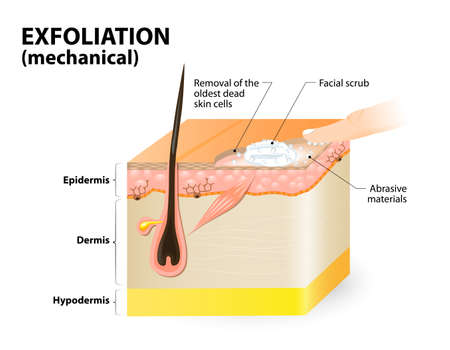 Illustration pour Cosmetology, Cross-section of a skin layers. - image libre de droit