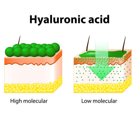 Illustration pour Hyaluronic acid. Hyaluronic acid in skin-care products. - image libre de droit