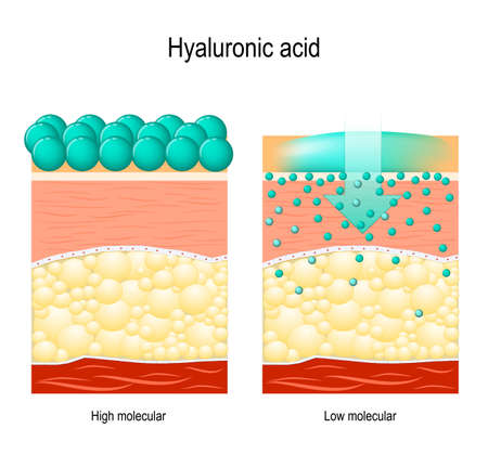 Illustration pour Hyaluronic acid. Hyaluronic acid in skin-care products. Low molecular and High molecular. Difference - image libre de droit