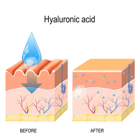 Illustration pour Hyaluronic acid. skin-care products. skin rejuvenation with help of hyaluronic acid - image libre de droit