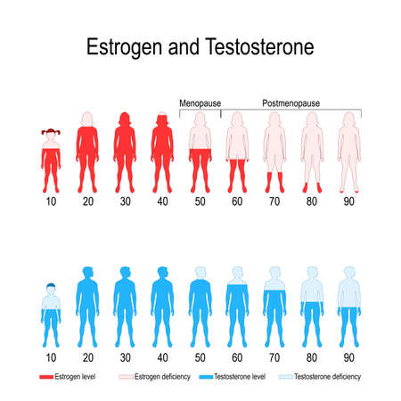 Illustration pour Estrogen and testosterone hormone levels. chart. vector diagram for your design, biological, medical, educational and scientific use. - image libre de droit