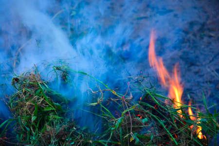 Photo for Burning foliage with smoke. - Royalty Free Image