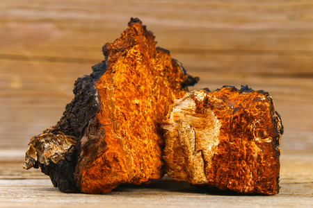 Photo for Healing tea from birch mushroom chaga is used in folk medicine - Royalty Free Image