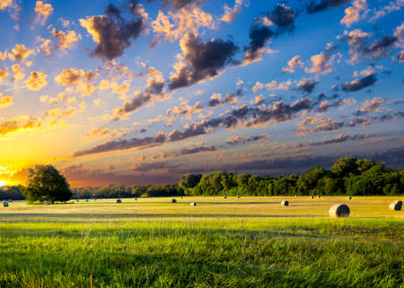 Foto de Tranquil Texas meadow at sunrise with hay bales strewn across the landscape - Imagen libre de derechos