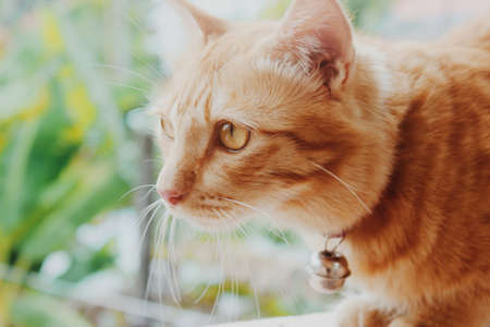 Photo pour Cat's stare.The cute cat is staring something on the window. - image libre de droit