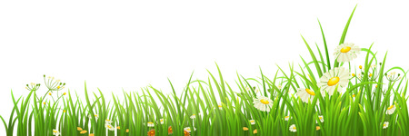 Illustration pour Green grass and flowers on white, vector illustration - image libre de droit