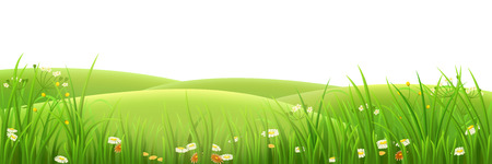 Illustration pour Meadow, green grass and flowers , vector illustration - image libre de droit