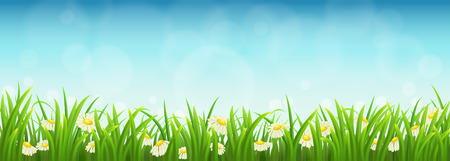 Illustration pour Fresh green grass, daisies and blue sky, vector illustration - image libre de droit
